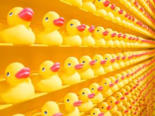 Yellow rubber duckies 4-19