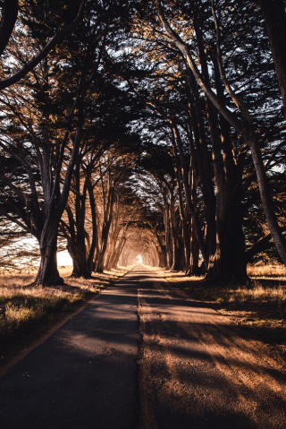 Tree lined roadway 8-18